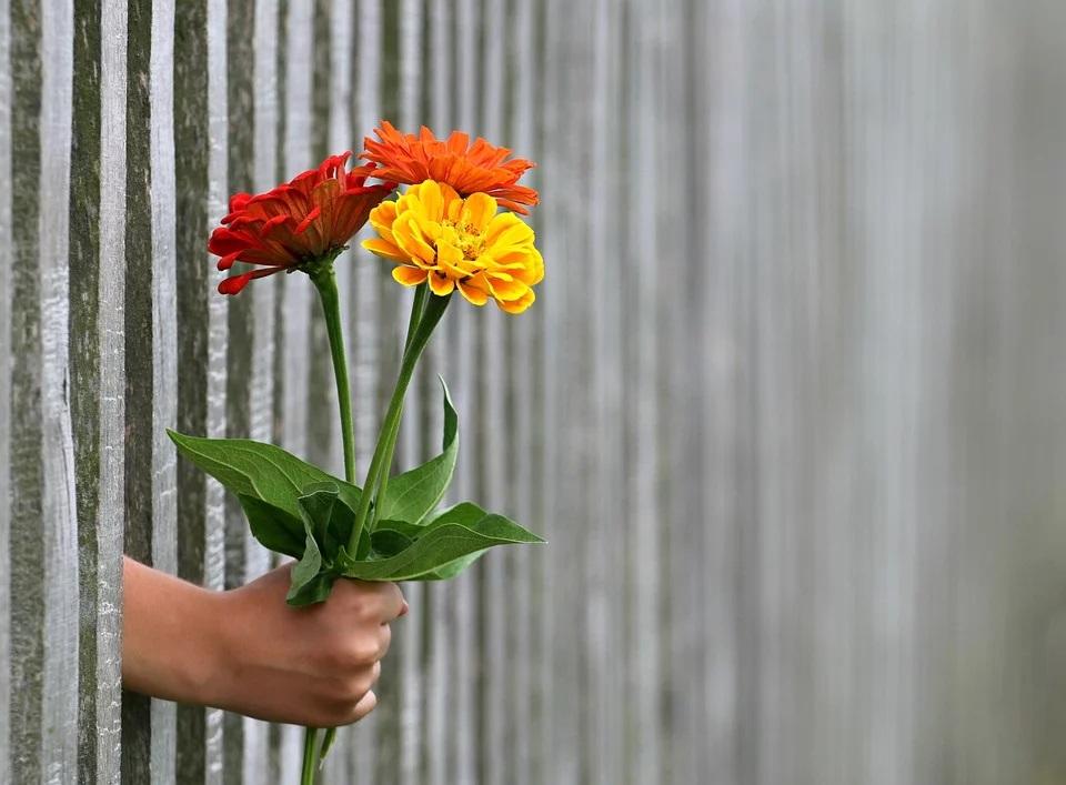 emocion flores